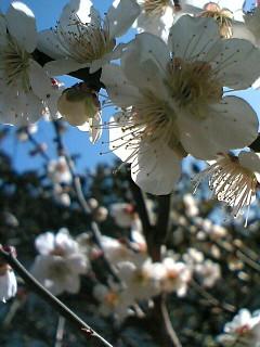 image/toka-2006-03-15T14:01:16-1.JPG